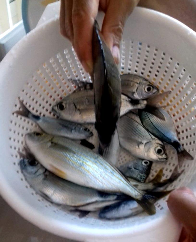 pesca 1c 2